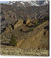Herd Of Elk   #7740 Canvas Print