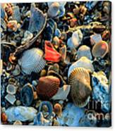 Here A Shell There A Shell Canvas Print
