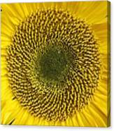 Here Comes The Sun.... Canvas Print