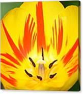 Here Comes The Sun Tulip Canvas Print