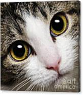 Here Kitty Kitty Close Up Canvas Print