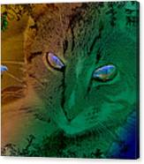 Here Kitty Kitty Canvas Print
