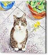 Here Kitty Kitty Kitty Canvas Print