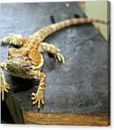 Here Lizard Lizard Canvas Print