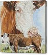 Hereford Cattle Canvas Print