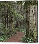 Heritage Forest Canvas Print