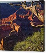 Hermit Rest Grand Canyon National Park Canvas Print