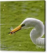 Heron And Dragonfly Canvas Print