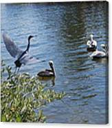 Heron And Pelicans Canvas Print