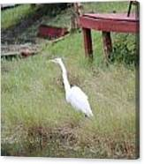 Heron And The Canal Canvas Print