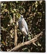 Heron At Katherine Gorge Canvas Print