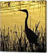 Heron At Sunrise Canvas Print