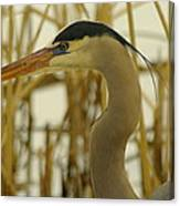 Heron Close Up Canvas Print