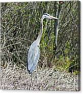 Heron Height Canvas Print