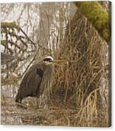 Heron In A Fog Canvas Print
