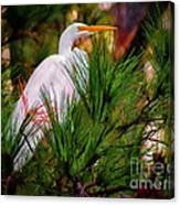 Heron In The Pines Canvas Print