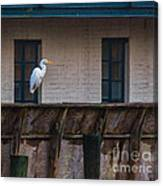 Heron In The Window Canvas Print
