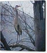 Heron Looking Out Canvas Print