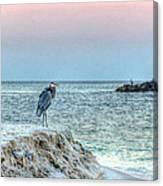 Heron On Beach Canvas Print