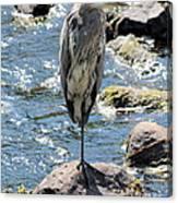 Heron On One Leg Canvas Print