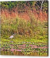 Heron On Shore Of Rapti River In Chitwan Np-nepal  Canvas Print