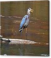 Heron On The Creek Canvas Print