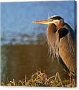 Heron On The Lake Canvas Print