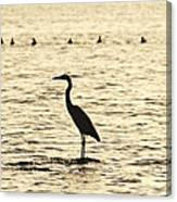 Heron Standing In Water Canvas Print