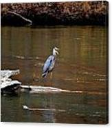 Heron Talking Canvas Print