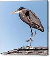 Heron Up On The Roof Canvas Print
