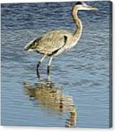 Heron Walking Through The Water. Canvas Print