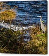 Heron Watchful Eye Canvas Print