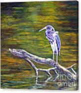 Heron Watching Canvas Print