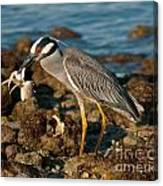 Heron With Crab Canvas Print
