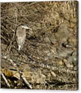 Heron's Winter's Watch Canvas Print