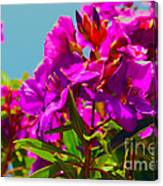 Hervey Bay Flowers Canvas Print