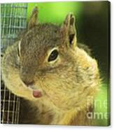 Hey Check Out My Big Cheeks Canvas Print