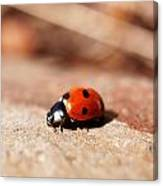 Hey There Little Lady Bug Canvas Print
