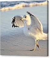 Hey Wait - Sea Gull Canvas Print