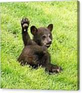 Hi Five Bear Canvas Print