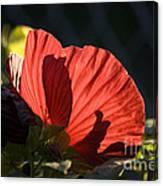 Hibiscus 10 Canvas Print