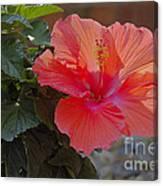 Hibiscus 2 Canvas Print