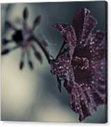 Hibiscus Acetosella Canvas Print