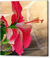 Hibiscus Along The Walk Way Canvas Print