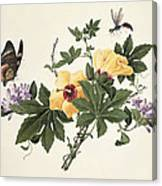 Hibiscus And Butterfly Canvas Print