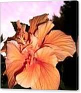 Hibiscus At Sunset Canvas Print