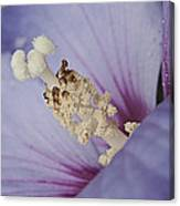 Hibiscus Blue Canvas Print