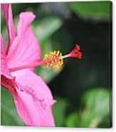 Hibiscus Bush Canvas Print