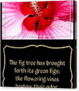Hibiscus Closeup With Bible Quote From Song Of Songs Canvas Print