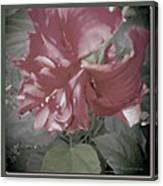 Hibiscus Dream Canvas Print
